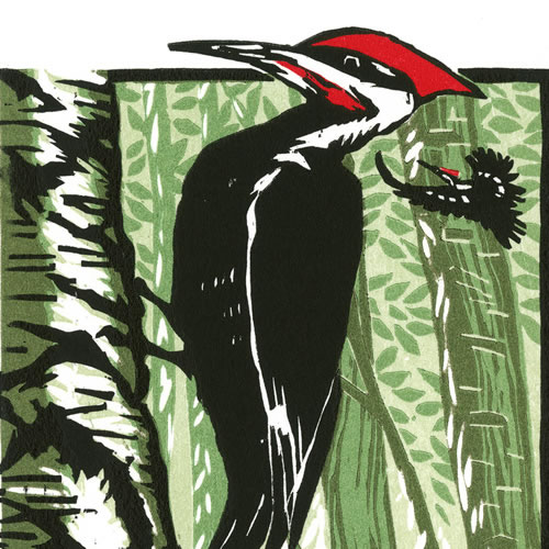 Sivertson Gallery Shop: Pileated Woodpecker